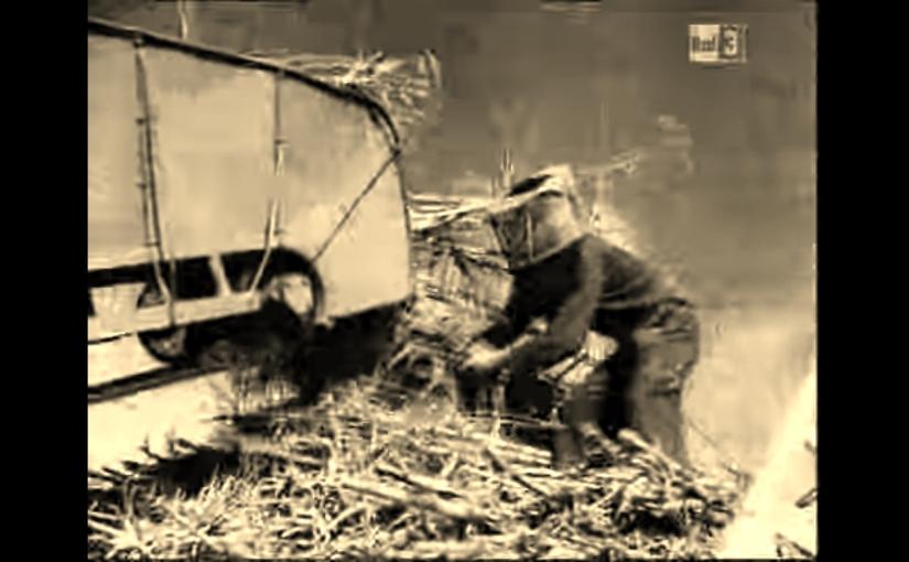 Bambù: coltivazioni industriali dal1930