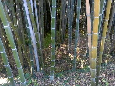 bambu cn 2