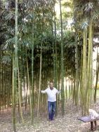 bambu e Max