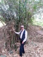 bambu ghana febbraio 2016
