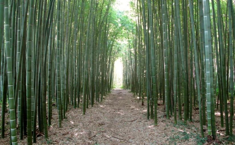 Pomodoro e bambù gigante, due storie diversamenteaffascinanti