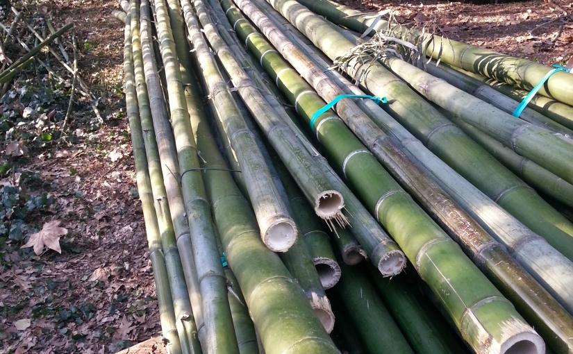 Formidabile durezza del bambù?!
