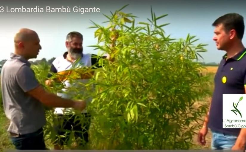 RAI TG Lombardia: bambuseti aMantova