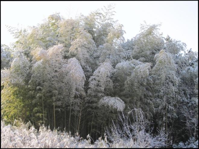 snow 00