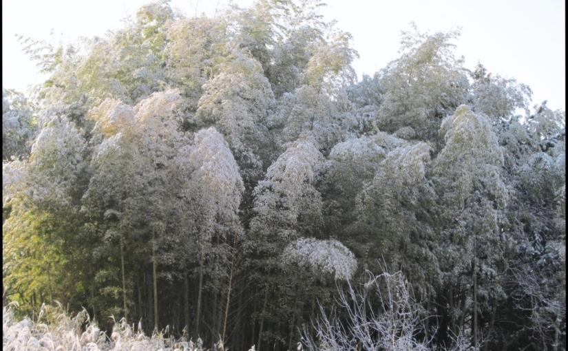 Bio-plastica e bambùgigante