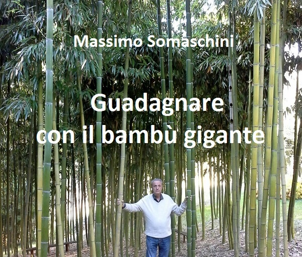 Bambuseti a quote