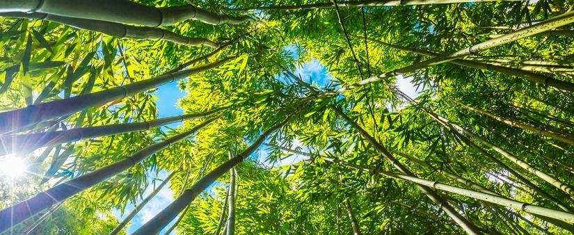 Vita in Campagna n°6/2017 e il bambùgigante