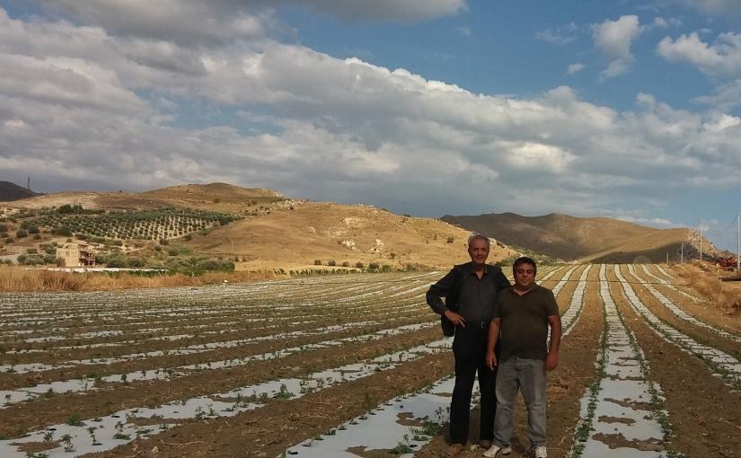 A Licata altri 2,5 ettari di stevia inSicilia