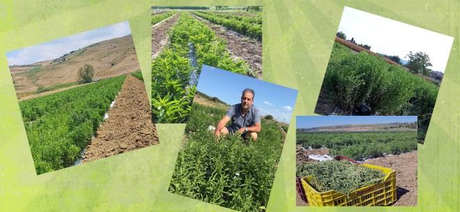 collage coltivazioni