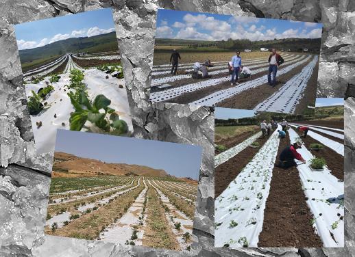 collage inizio colture