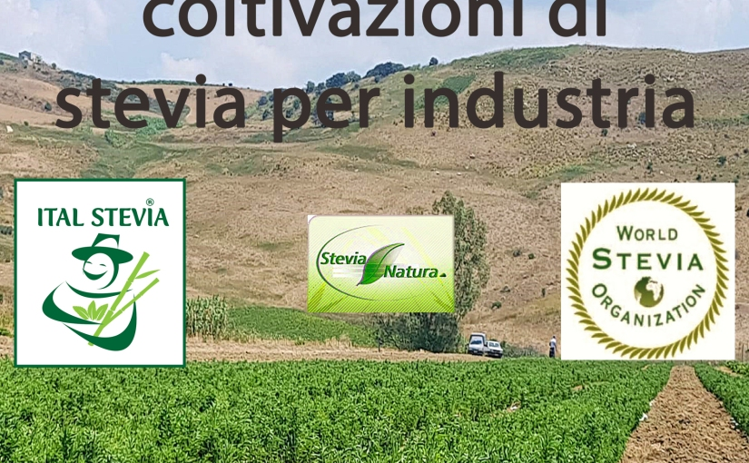 Stevia: project leader cercasi