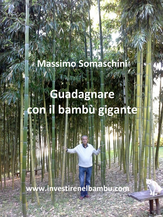 Vendita Bambu Milano.Investire Nel Bambu Guadagnare Con La Stevia Bambu