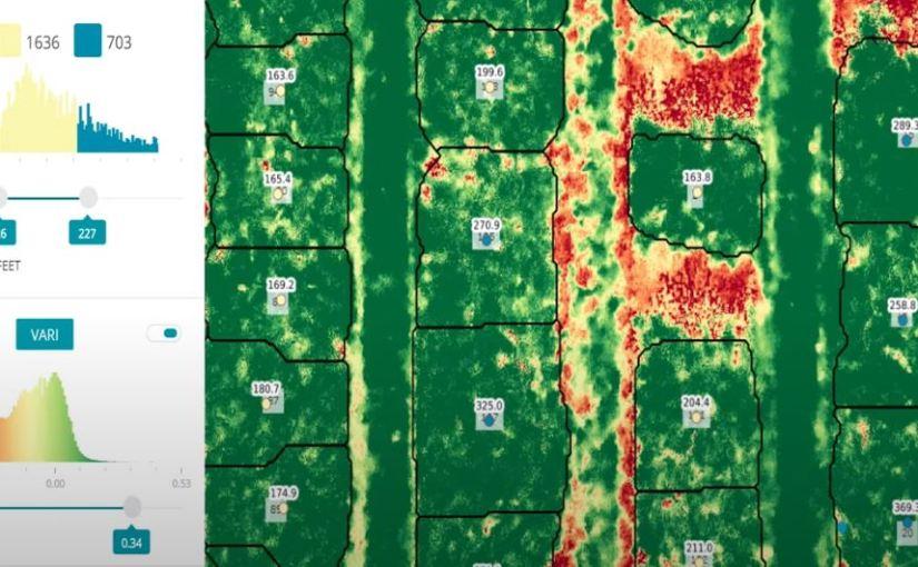 Radiografia alle piante: si può fare?