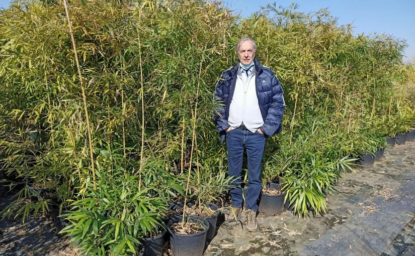 Piante madri bambù ma quali scegliere?