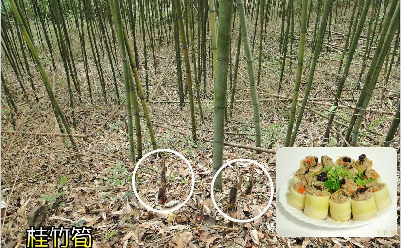 Proprietà nutrizionali bambùgigante